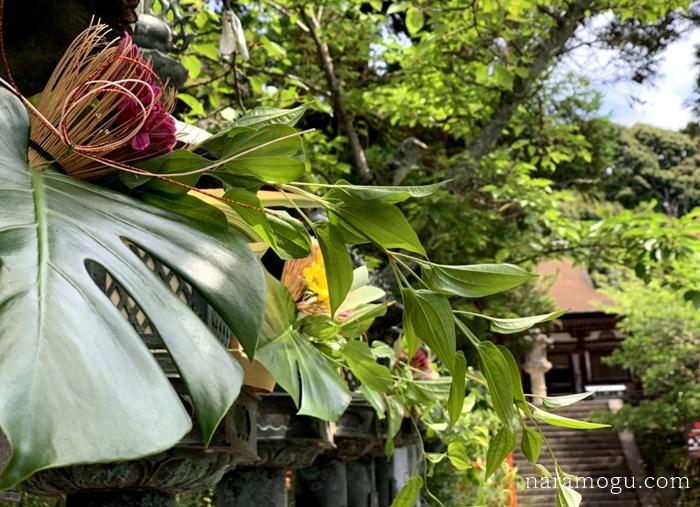 長弓寺のあじさい、国宝、精進料理&川端風太朗でお茶はいかがでしょう。。。